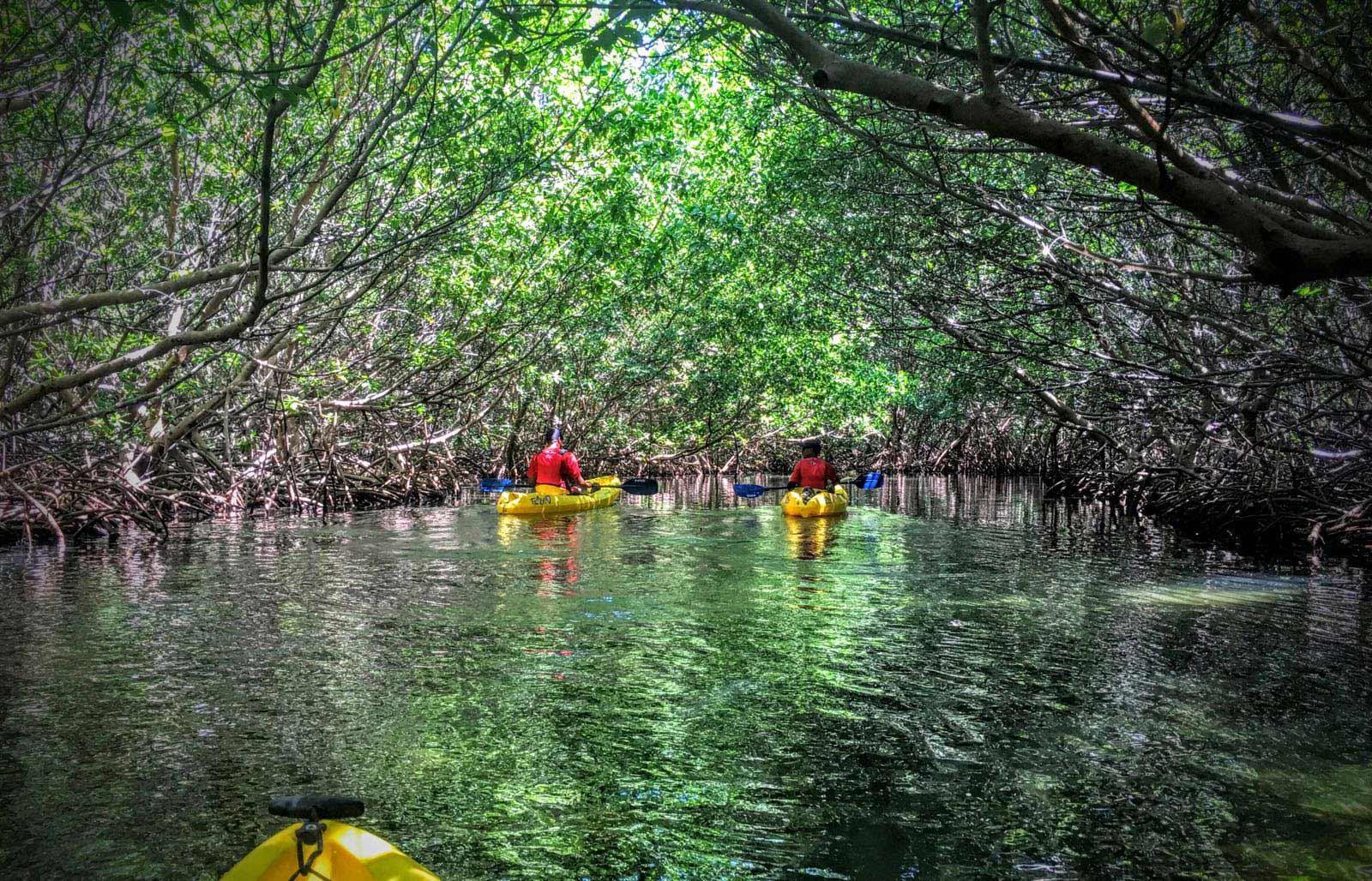 Kayakers entering the Fajardo Bio Bay through a red mangrove channel with Kayaking Puerto Rico Bioluminescence Kayak Tour