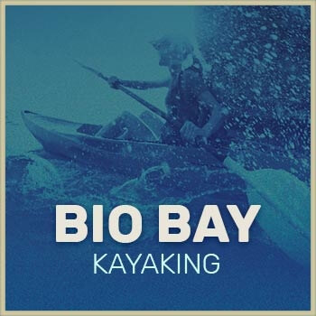 Bio Bay Kayaking adventure preview button
