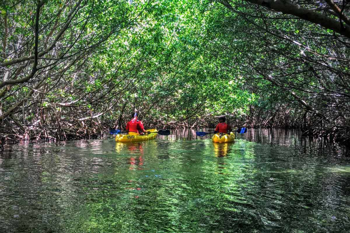Kayakers entering the Fajardo Bio Bay through a red mangrove channel with Kayaking Puerto Rico Bioluminescence Kayak Tour