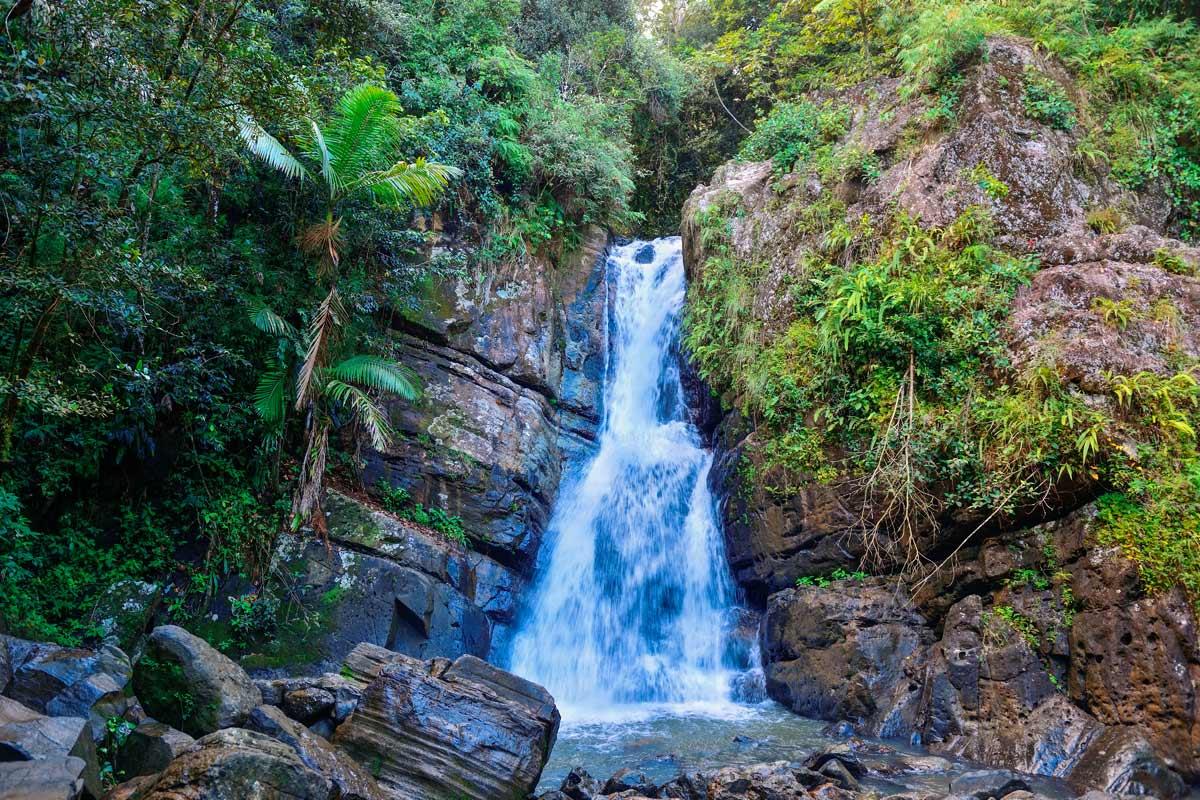 El Yunque National Rainforest Tour