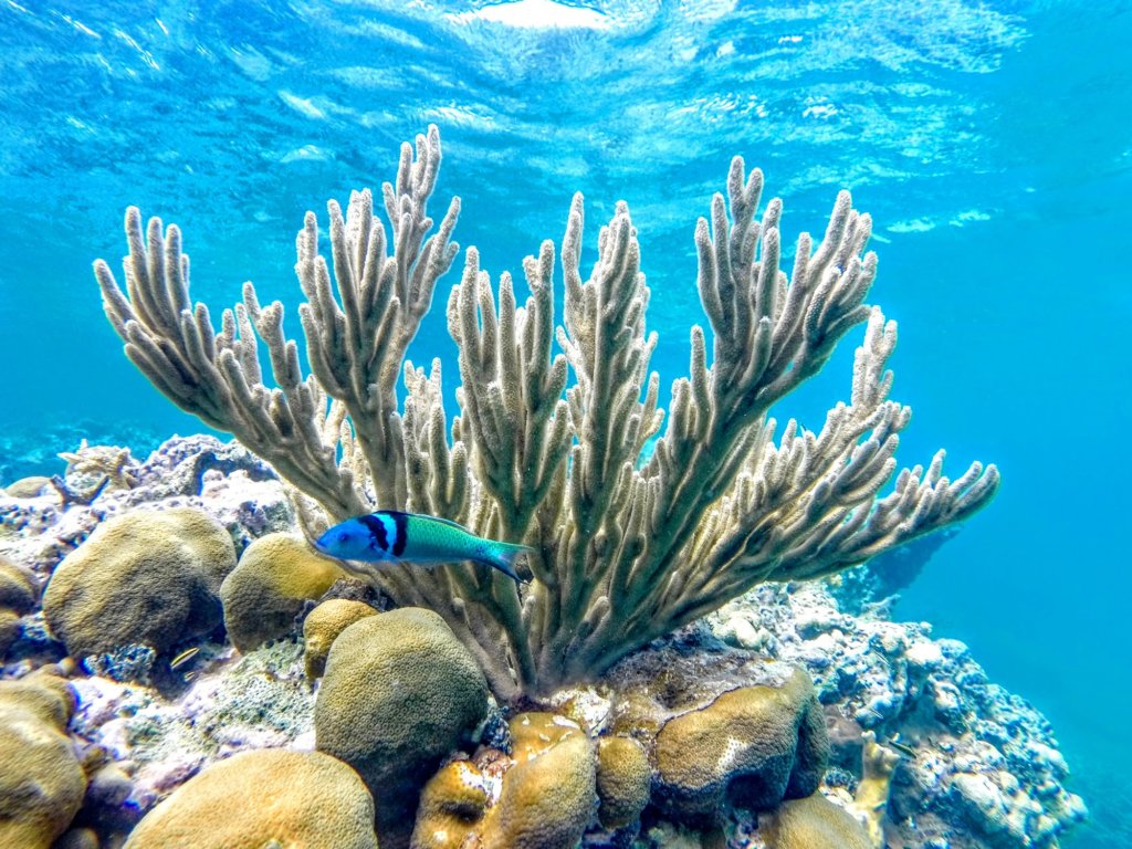 Our eco guides lead the way to show our guests the best spots in the reef.